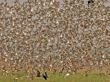 Mangaljodi Wetlands | Odisha Tourism | Things to do in